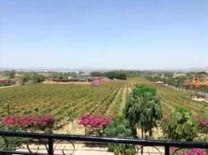 Wine tasting and vineyard visiting tour
